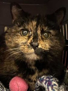 Betty the shy cat in need of a new home