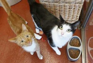 Lola and Charlie, a pair of male and female cats looking for a new home.