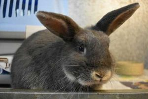 Ludwig the male rabbit looking for a new home.