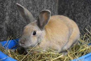 Norman the rabbit is looking for a new home.