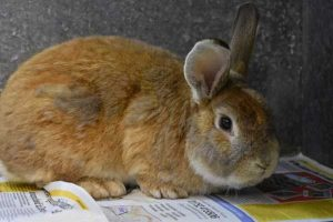 Spud the rabbit is looking for a new home.