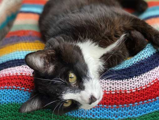 Cute black and white cat on a multi-coloured blanket