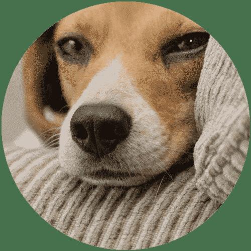 Puppy in quilt