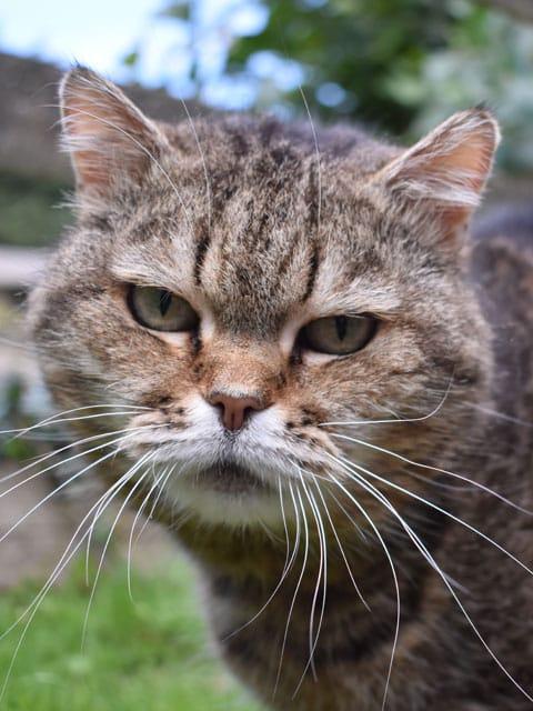 Bertha the cat