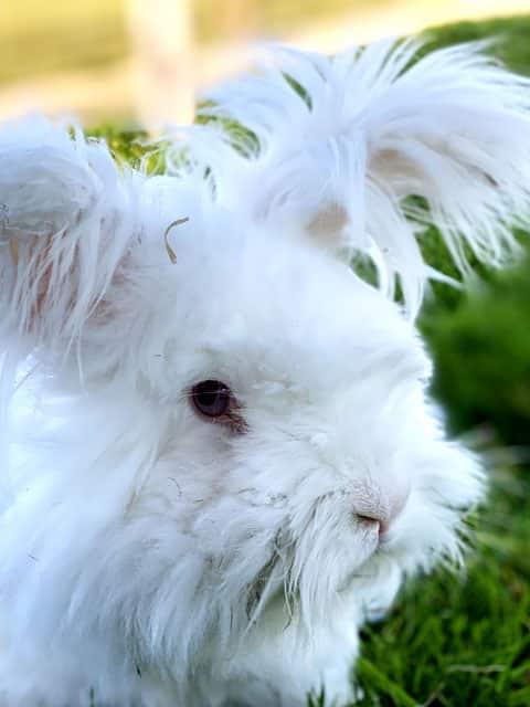 Rabbit called Jeffy