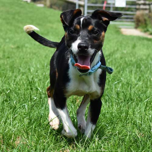Oreo the dog thanking you for joining the adopters club