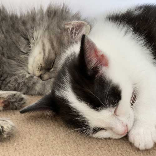 Two cute kittens that have benefited from a donation to Woodside Sanctuary