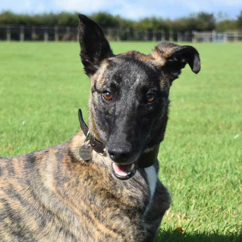 Yuko the dog enjoying life due to money raised through memberships