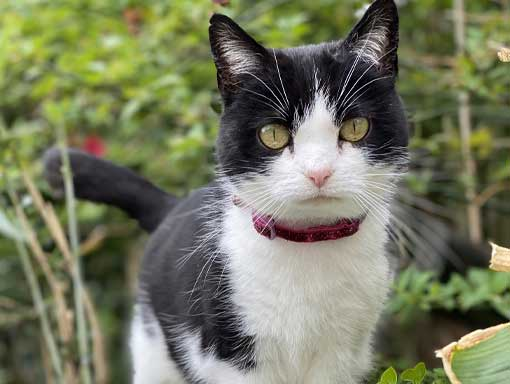 Our cute black and white cat April, hoping you will sponsor us.
