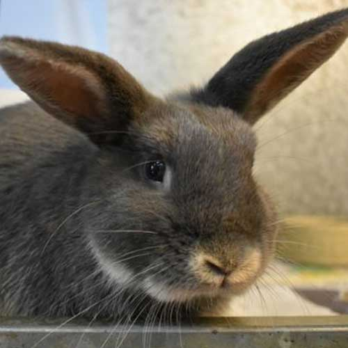 Ludwig the rabbit hoping you will sponsor us.