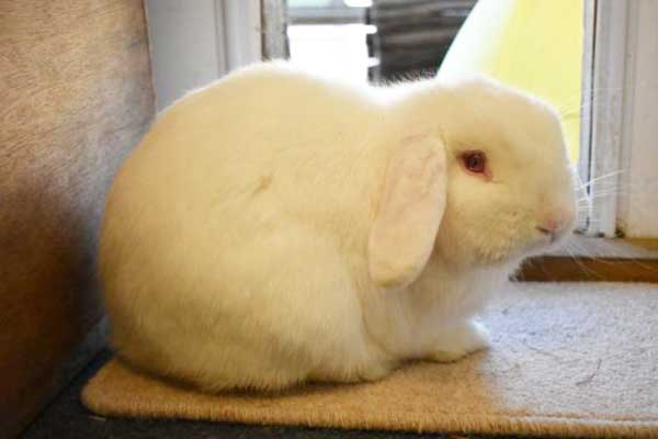 Roger the friendly rabbit looking for a new home.